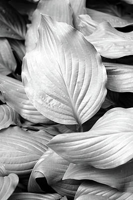 Photograph - Softly Curving Foliage Bw 062618 by Mary Bedy