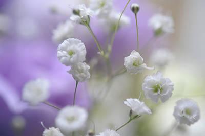 Photograph - Softly. Dreamy World by Jenny Rainbow