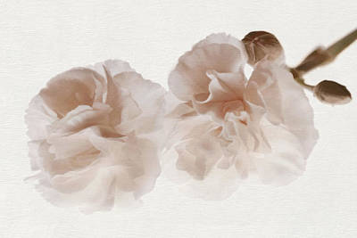 Photograph - Softly Opening by Leda Robertson