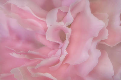 Photograph - Softly Pink by David Hare