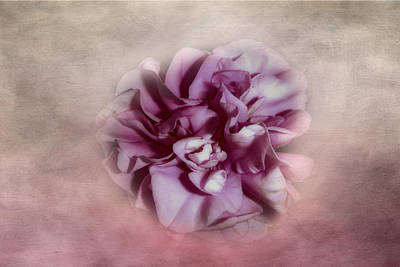 Photograph - Softly Pink by Judy Hall-Folde