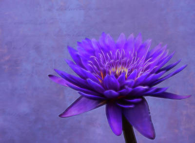 Photograph - Softly Purple by Judy Vincent