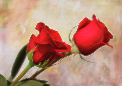Photograph - Softly Red by Judy Vincent