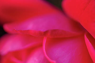 Photograph - Softly Red Rose by SR Green