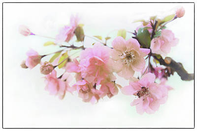 Photograph - Softly Spring by Jessica Jenney