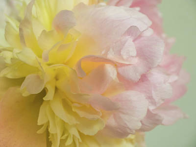 Photograph - Softness And Light by Robin Zygelman