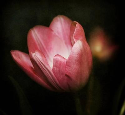 Purple Flowers Digital Art - Softness by Cathie Tyler