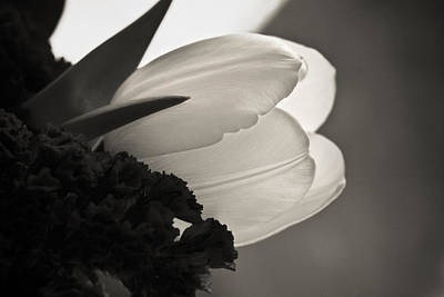 Floral Royalty-Free and Rights-Managed Images - Lit Tulip by Marilyn Hunt
