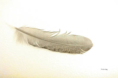 Photograph - Softness Of A Feather by Randi Grace Nilsberg