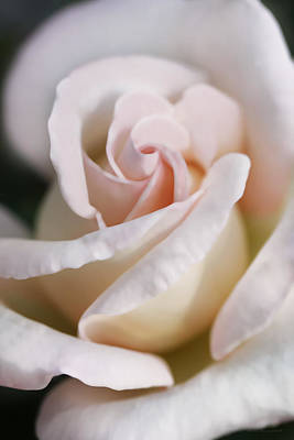Photograph - Softness Of A Pastel Pink Rose Flower by Jennie Marie Schell
