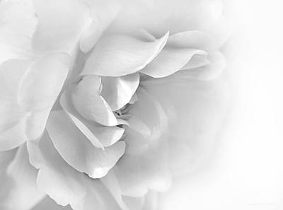 Photograph - Softness Of Gray Rose Petals by Jennie Marie Schell