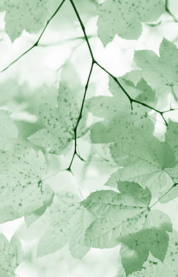 Photograph - Softness Of Green Leaves by Jennie Marie Schell