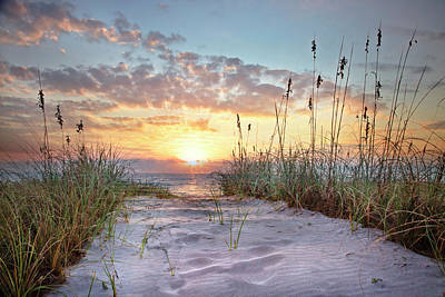 Photograph - Softness Of Morning by Debra and Dave Vanderlaan