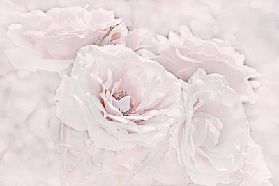 Photograph - Softness Of Pink Roses by Jennie Marie Schell