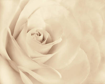 Photograph - Softness Of The Rose In Beige by Jennie Marie Schell