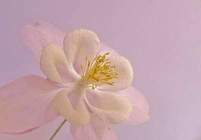 Photograph - Softy Beautiful by Barbara St Jean