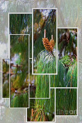 Photograph - Soggy In Soldados, Ecuador by Al Bourassa