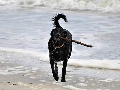 Soggy Stick Art Print by Al Powell Photography USA