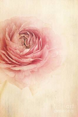 Single Flower Photograph - Sogno Romantico by Priska Wettstein