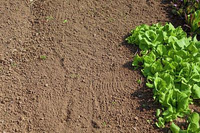 Soil And Chicory Art Print by Matjaz Preseren