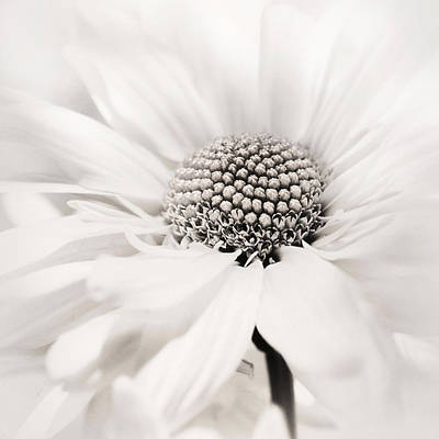 Photograph - Soiree In Black N White by Darlene Kwiatkowski