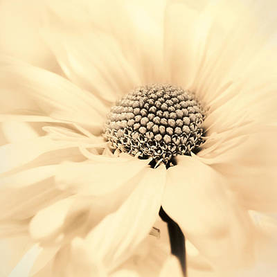 Photograph - Soiree In Creamy Yellow by Darlene Kwiatkowski