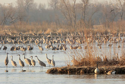 Photograph - Sojourn On The Platte by Susan Rissi Tregoning