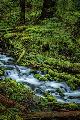 Just Desserts - Sol Duc Falls Trail by Mike Penney