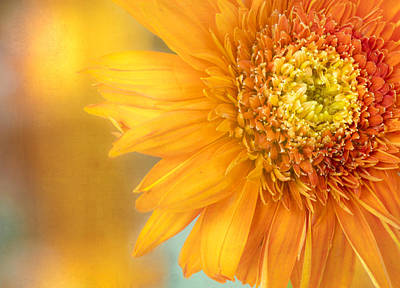 Florals Royalty-Free and Rights-Managed Images - Solar Flare by Jade Moon