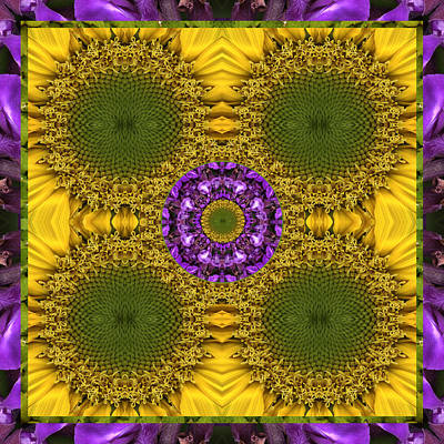 Chakra Rainbow Photograph - Solar Sage by Bell And Todd