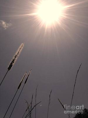 Photograph - Solar Sun by Robin Lewis