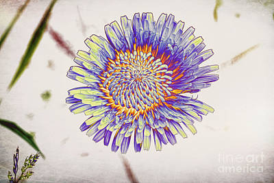 Abstract Flowers Royalty-Free and Rights-Managed Images - Solarisation3 by Veikko Suikkanen