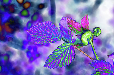 Photograph - Solarized Salmonberry Flower by Cathy Mahnke