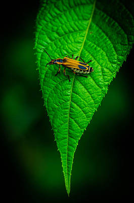 Soldier Beetle Art Print by Bruce Pritchett