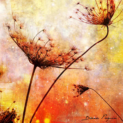 Mixed Media - Soleil Soleil by Diane Paquin