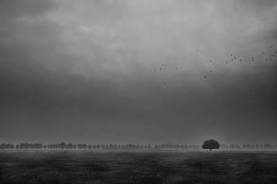 Mist Photograph - Solitaire by Michiel Hageman