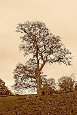 Photograph - Solitary Autumn Tree Hdr Sepia Tone by Jacek Wojnarowski