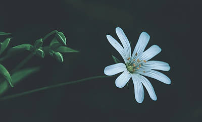 Photograph - Solitary Beauty by Pixabay