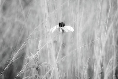 Photograph - Solitary by Dawn J Benko