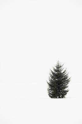 Cold Temperature Photograph - Solitary Evergreen Tree by Jennifer Squires