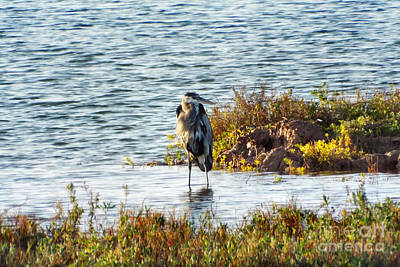 Photograph - Solitary Heron by Audrey Van Tassell
