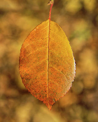 Photograph - Solitary Leaf -01 by Rob Graham