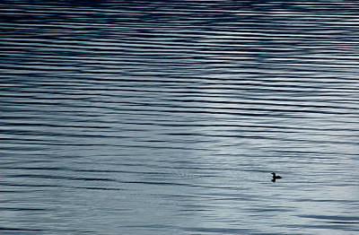 Photograph - Solitary Loon On Kootenay Lake, British Columbia. by Rob Huntley