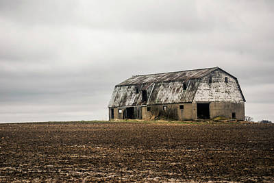 Photograph - Solitary by Melissa Newcomb
