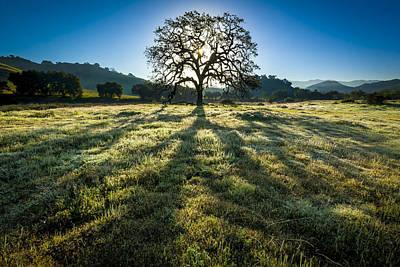 Photograph - Tree Of Life by Joe Doherty