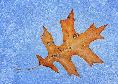 Photograph - Solitary Oak Leaf On Ice by Carolyn Derstine
