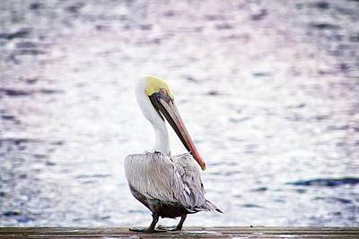 Photograph - Solitary Pelican by Alice Gipson