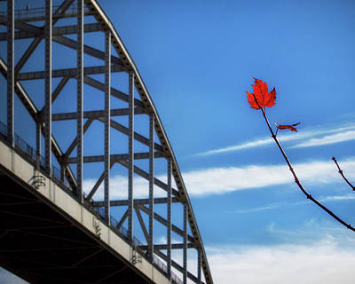 Photograph - Solitary Red Maple Leaf At The St. Georges Bridge by Bill Swartwout