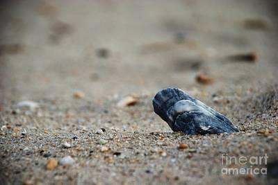 Solitary Shell Art Print by Joseph Perno