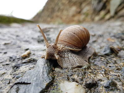 Photograph - Solitary Snail by Giuseppe Epifani